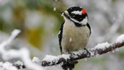 Birding & Wildlife